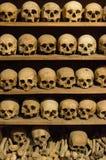 Menselijke Schedels Stock Foto's