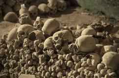 Menselijke schedels en beenderen Royalty-vrije Stock Fotografie