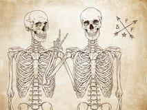 Menselijke skeletten beste vrienden die over oude grungedocument vector stellen als achtergrond Stock Fotografie