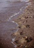 Menselijke sporen op zand Royalty-vrije Stock Foto's