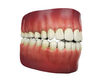Menselijke tanden op witte achtergrond Royalty-vrije Stock Foto
