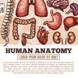 Menselijke vector de schetsaffiche van de organenanatomie Stock Foto