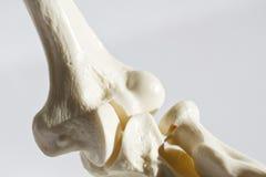 Menselijke verbinding/beenderen Royalty-vrije Stock Afbeeldingen