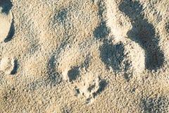 Menselijke voetafdrukken in het zand op het strand Royalty-vrije Stock Afbeelding