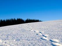 Menselijke voetstappen in de sneeuw Stock Foto