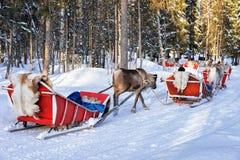 Mensen bij de caravan van de Rendierslee in het bos van de winterrovaniemi stock fotografie