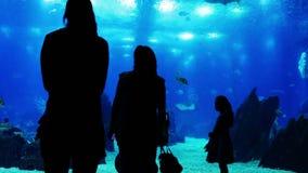 Mensen bij oceanarium stock videobeelden