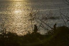 Mensen bij Strand in Zonsondergangtijd, de Galapagos, Ecuador Stock Afbeeldingen