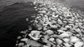 Mensen dichtbij Ijsijsschol en ijsberg in oceaan van Antarctica stock video