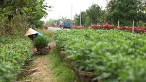 Mensen die aan het bloemgebied werken in Mekong Delta stock footage