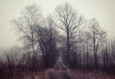 Mensen die aan mystic bos lopen Stock Afbeelding