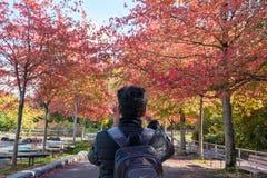 Mensen die beeld van Dalingsgebladerte, kleurrijke groene rode oranje en gele bladeren in de herfst nemen, Canada Vancouver, BC royalty-vrije stock foto's