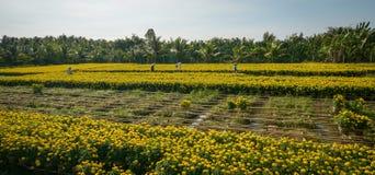 Mensen die bij de bloemgebieden werken Stock Foto