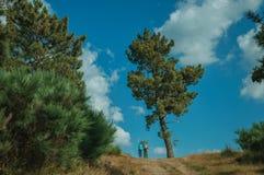 Mensen die bij de landweg met boom golven stock foto