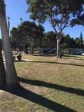 Mensen die bij het park zitten Stock Foto's