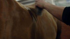 Mensen die bruin paardhaar verzorgen Het verzorgen van een paard Sluit omhoog stock footage