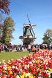 Mensen die dichtbij traditionele oude houten molen op gebied van gele en rode mooie tulpen dicht naar boven gaan De lentetijd bin royalty-vrije stock foto