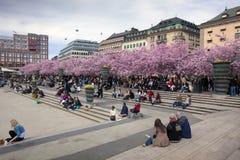Mensen die in een bloemrijk park lopen stock afbeelding