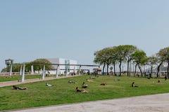 Mensen die en in een de zomerdag zonnebaden koelen stock fotografie