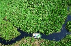 Mensen die groente in verontreinigd water oogsten Royalty-vrije Stock Afbeelding