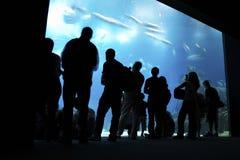 Mensen die groot aquarium bekijken Stock Foto