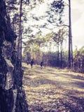 Mensen die in het hout lopen stock foto's