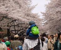 Mensen die kersen van bloesems in Japan genieten Stock Afbeelding