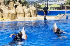 Mensen die met dolfijnen zwemmen Stock Foto
