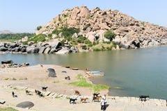Mensen die met een kudde van geiten lopen Stock Foto