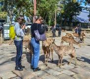 Mensen die met heilige deers spelen stock afbeeldingen