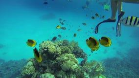 Mensen die onder vissen zwemmen stock videobeelden