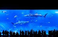Mensen die op de walvishaai onder andere vissen letten in Churau stock afbeelding