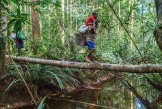 Mensen die rivier op de brug van de boomboomstam kruisen, stam van Korowai-mensen Royalty-vrije Stock Foto
