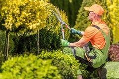 Mensen die Tuinbomen vormen stock foto's