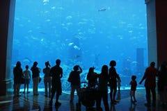 Mensen die van de vissen van het Aquarium genieten Royalty-vrije Stock Foto