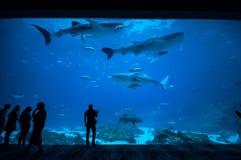 Mensen die vissen waarnemen bij aquarium 2 Royalty-vrije Stock Foto's