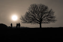 Mensen en boom die bij zonsondergang worden gesilhouetteerd Stock Foto
