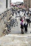 Mensen en duiven rond de Nieuwe Moskeebinnenplaats Royalty-vrije Stock Foto's