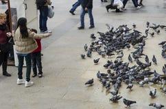 Mensen en duiven rond de Nieuwe Moskeebinnenplaats Royalty-vrije Stock Afbeeldingen