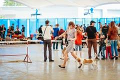 Mensen en honden Internationale bezoektentoonstelling - Stock Afbeelding