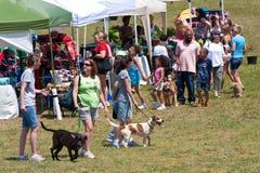 Mensen en Hun Gang van Honden rond bij het Festival van de Hond Stock Foto's