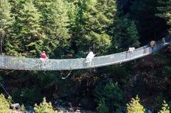Mensen en muilezel op kabelbrug Royalty-vrije Stock Foto