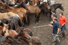 Mensen en paarden Royalty-vrije Stock Afbeelding