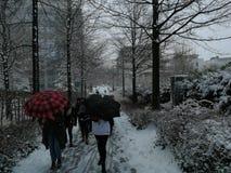 Mensen en sneeuw Stock Afbeeldingen