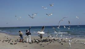 Mensen en zeemeeuwen bij het strand stock afbeelding