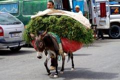 Mensen en zijn ezelslading van hooi in souk van de stad van Rissani in Marokko Royalty-vrije Stock Foto