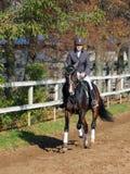 Mensen in formele kleding die op Hanoverian-paard berijden Royalty-vrije Stock Afbeelding