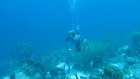 Mensen het duiken Caraïbische overzeese onderwater1080p video stock footage