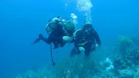Mensen het duiken Caraïbische overzeese onderwater1080p video stock videobeelden