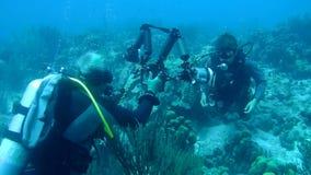 Mensen het duiken Caraïbische overzeese onderwatervideo stock videobeelden